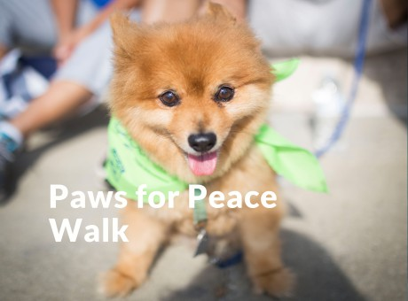 Paws for Peace Button